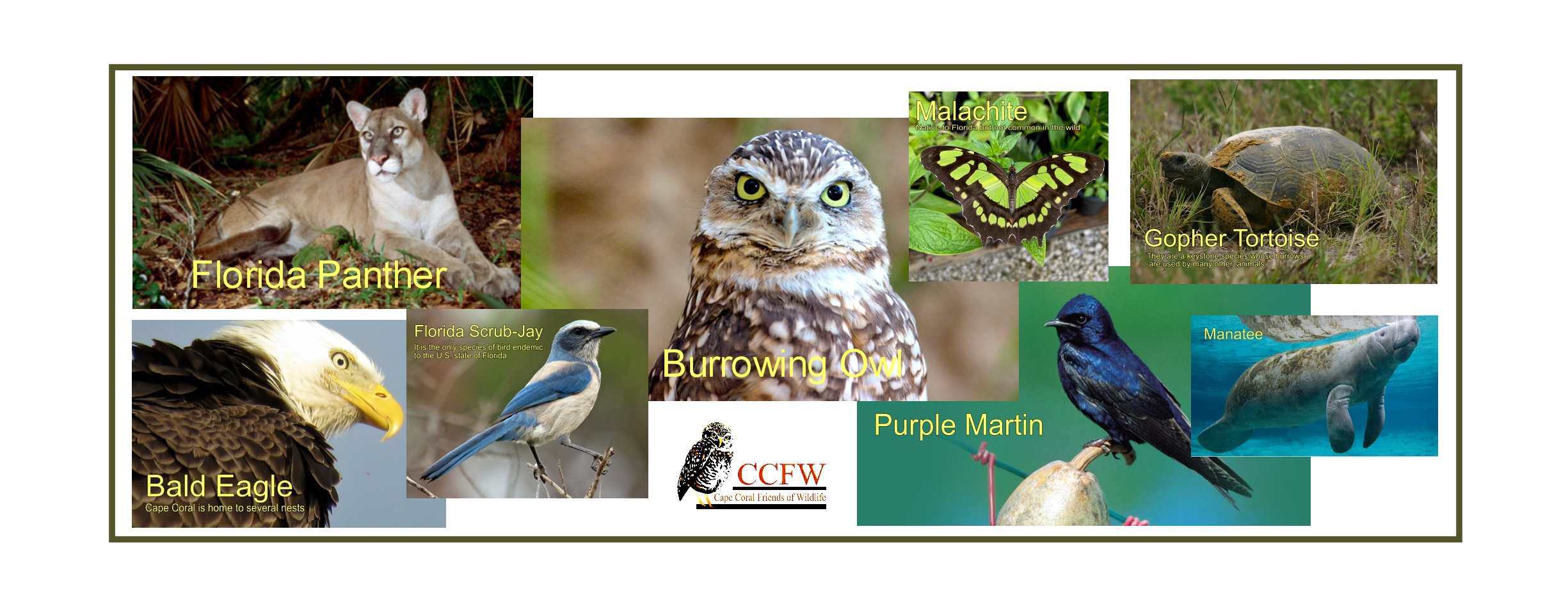 Burrowing Owl Festival Wildlife and Environmental Expo